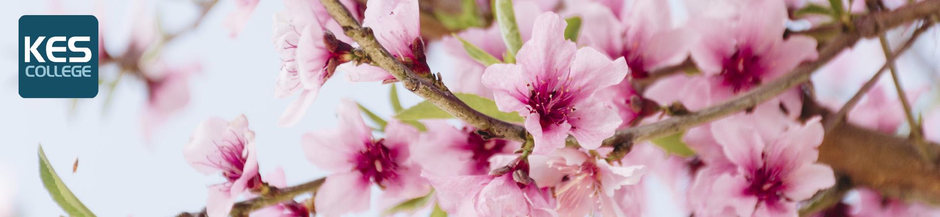 Easter Beauty Week