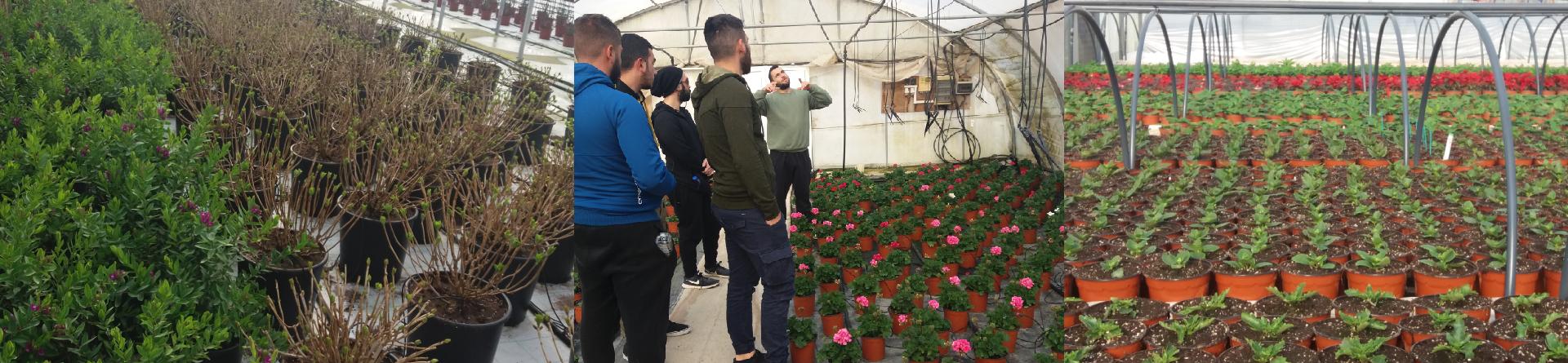 Eκπαιδευτική επίσκεψη φοιτητών σε σύγχρονα υδροπονικά φυτώρια γλαστρικών φυτών